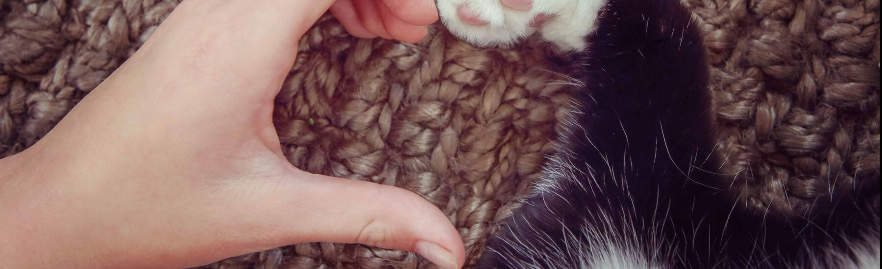 Hand of a person and cat paw forming the shape of a heart