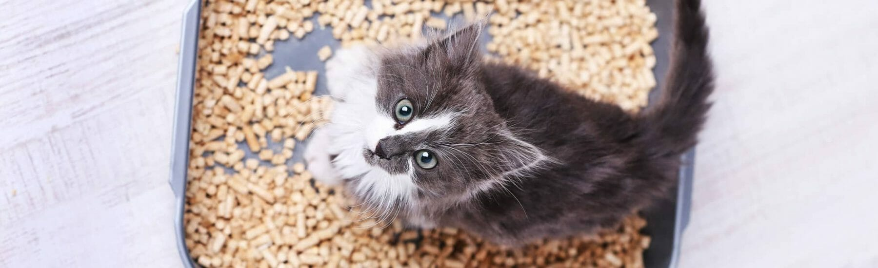 Cat standing in a litter box