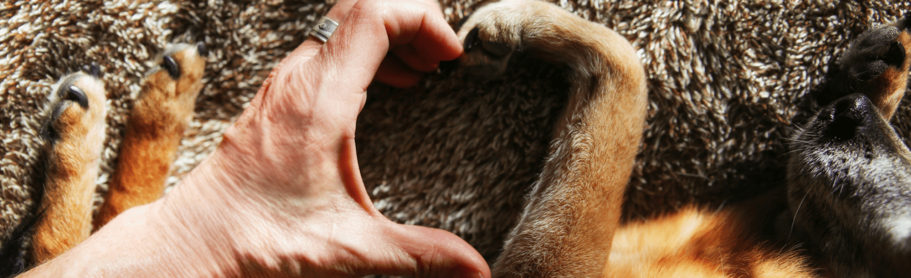 Hand of a person and dog paw forming the shape of a heart