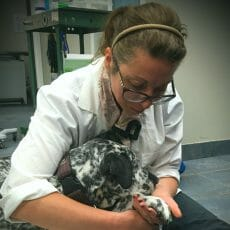 Dr. Shelli Meleck examining a paw of a dog